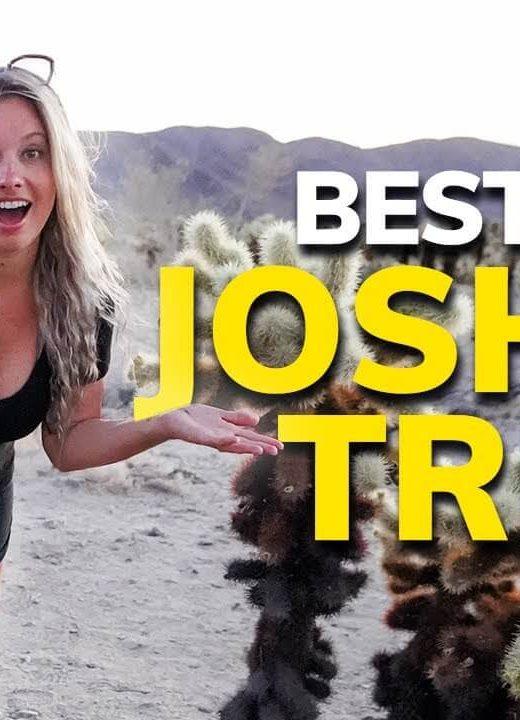 Things to Do in Joshua Tree